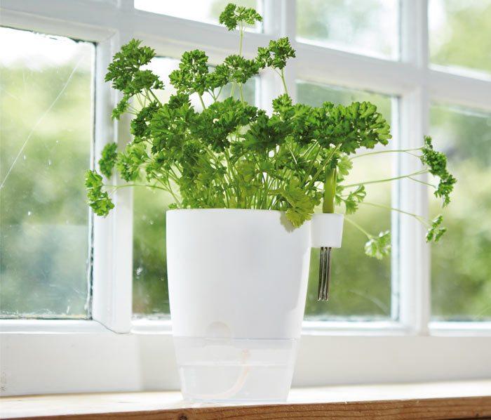 Elho Brussels Herbs all-in-1
